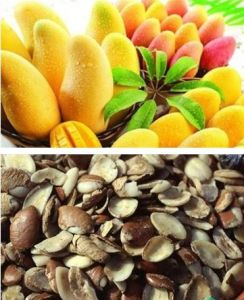 China 100 Natural African Mango Seed Extract 10 1 China Weight