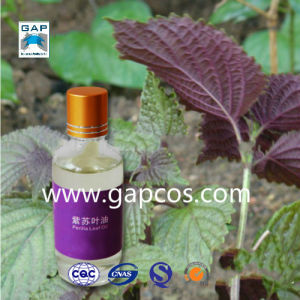 Organic Natural 100% Purity of Perilla Leaf Oil