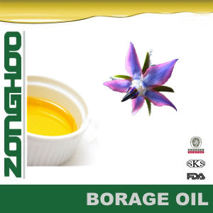 100% Natural Borage Oil for Skin Good Supplier From China