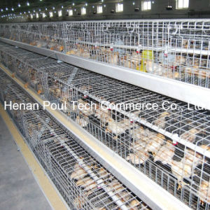 Poultry Farm Little Chicken Cage (galvanization) pictures & photos