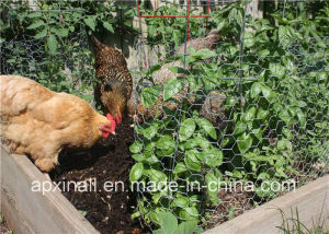 Chicken Wire Cage pictures & photos