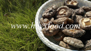 Hot Sale Smooth Surface Fresh Shiitake Mushroom pictures & photos