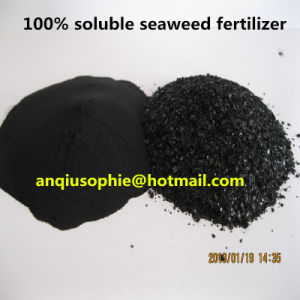 Exporting 100% Soluble Seaweed Extract Fertilizer pictures & photos