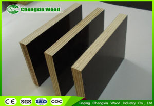 1250*2500mm and 1220*2440mm Two Times Hot Press Shuttering Plywood From Chengxin Factory