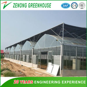 High Quality Vegetable/Tomato/Pepper/Cucumber Green House for Sale