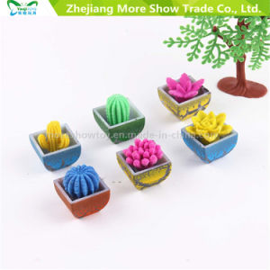 Novelty Water Grow up Plants Mini Cactus Flower Growing Pet Plants Toys pictures & photos