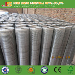 1 Inch Galvanized Welded Wire Mesh pictures & photos