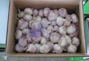 Red/Purple Garlic China Origin Strong Flavor