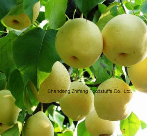 2017 Fresh Sweet Golden Pear with Good Quality pictures & photos