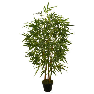 Bamboo Plant with 7 Inch Plastic Pot