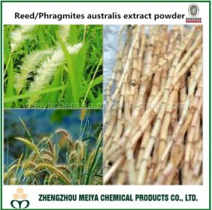 China Origin Phragmites Australis /Reed Root Powder Extract 10: 1, 20: 1 for Health pictures & photos