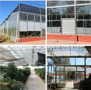 Steel Structure Green House/Vegetable Warehouse (DG1-024) pictures & photos