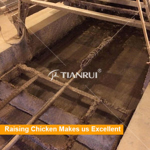 China a Type Layer Egg Chicken Cage for Sale in Philippines pictures & photos
