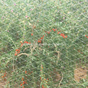 UV Protection Anti-Bird Net for Agriculture