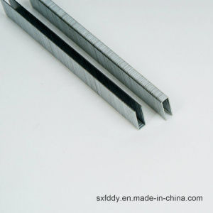9725 Manufacturer Supply Electric Sheet Galvanized Staple pictures & photos