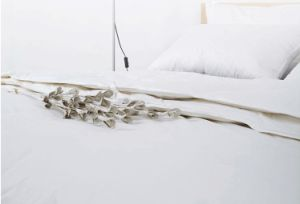 Hangzhou City Factory Solid Cover White Goose Down Comforter