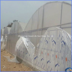 4mm/6mm Translucent Double Skin Polycarbonate Hollow Sheet for Greenhouse pictures & photos