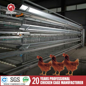 H Type Chicken Automatic Cage Poultry Equipmet Bird pictures & photos