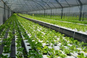 The Sainpoly Agricultural/Commercial Hydroponics Greenhouse pictures & photos