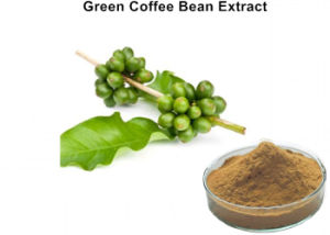 China Green Coffee Bean Powder Green Coffee Bean Powder