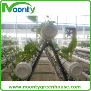 a-Frame Lettuce Hydroponics for Sale