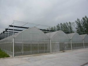 10-Years Warranty Polycarbonate Sheets Greenhouse