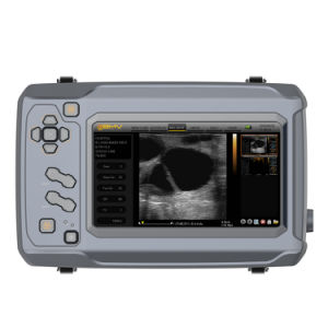 China Bestscan S6 High Quality Imaging Equine Ultrasound pictures & photos