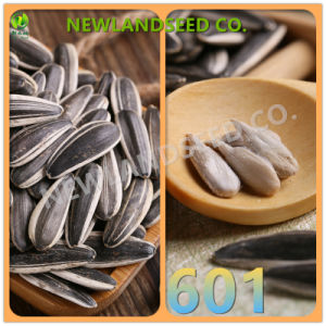 Top Quality Sunflower Seeds with Available Free Sample for You