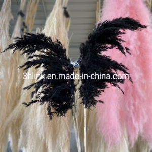 Black Pampas Pampas Plant Natural Grey Black Natural Grey Dried Large Pampas Grass, Tall Swingers Grass, Feather Flowers, Grey Flowers