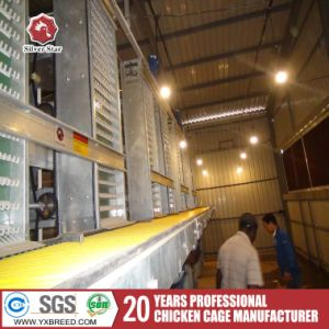 Chicken Egg Layer Cage to Uganda/UAE Poultry Farm (A-4L120)