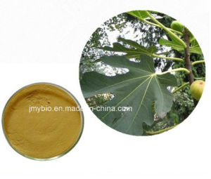 Manufacture Natural 10% Flavones 5: 1 10: 1 Fig Leaf Extract pictures & photos