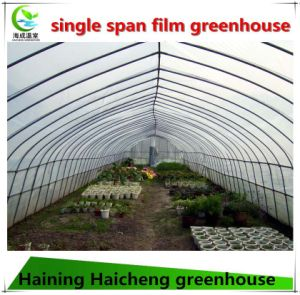 Single Span Plastic Film Greenhouse for Industrial Used