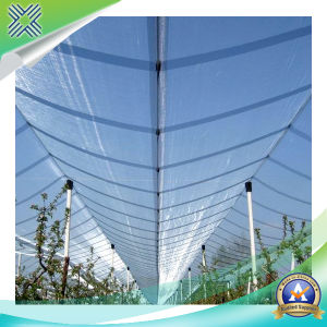 Plastic Anti-Bird Netting pictures & photos