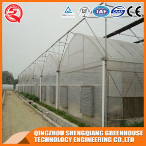 Agriculture Vegetable/ Flower PE Film Greenhouse for Growing Plants pictures & photos