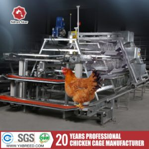 Silver Star Chicken Egg Poultry Farm Equipment / Chicken Layer Cage pictures & photos