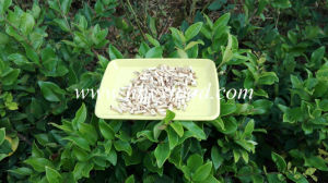 Very Delicious Dry Shiitake Mushroom Granules pictures & photos
