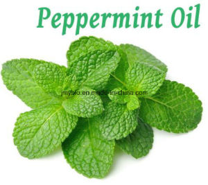 Hot Selling Organic Peppermint Essential Oil pictures & photos