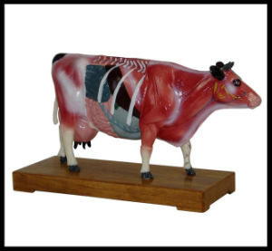 Acupuncture Animal Model (M-6-C) pictures & photos