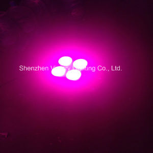 Hydroponic COB 4 Brand Full Spectrum 300W Indoor Plant LED Growlight pictures & photos