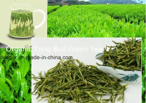 Fresh Yong Green Tea pictures & photos