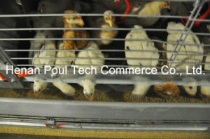 Brooder Chicken Cage (H type) pictures & photos