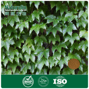 100% Natural IVY Extract Powder with 10% Hederacoside C by HPLC for Cough Syrup