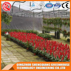 Multi-Span Steel Structure PC Sheet Greenhouse for Vegetable pictures & photos