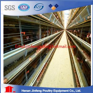 Laying Cages H Type for Algeria pictures & photos