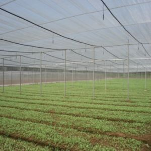 50mesh HDPE Anti Aphid Net pictures & photos