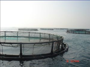 HDPE Aquaculture Seabass Culture Fishing Cage pictures & photos