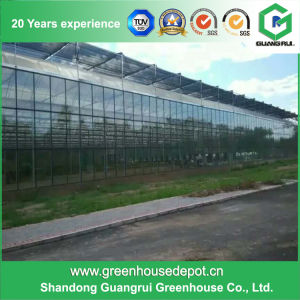 High Qaulity PE Agriculture Polytunnel Greenhouse for Sale pictures & photos