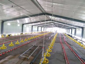 High Quality Steel Frame Poultry House and Chicken Farm pictures & photos