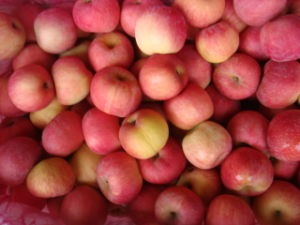 Chinese Fresh FUJI Apple (HOT SALE) pictures & photos