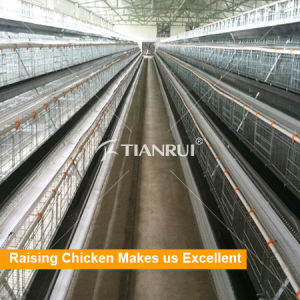 Factory A type layer chicken cage raising chicken ourself pictures & photos